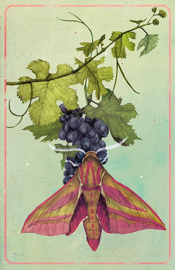 'Weinschwärmer' limitierter Kunstdruck von Marco Wagner